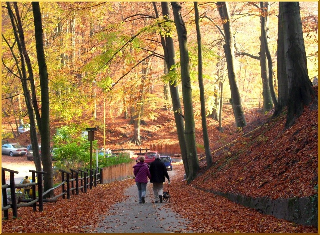 Autumn in forest