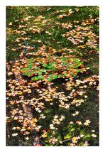 Autumn In Japan 2012-36