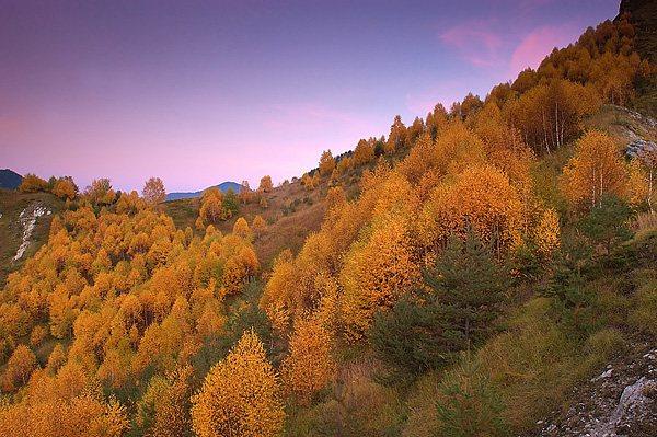 Autumn in valley of death