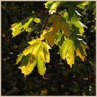 autumn in windy nook