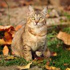 Autumn kitty .