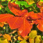 Autumn Leaf's 2