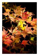 Autumn Leaves-10