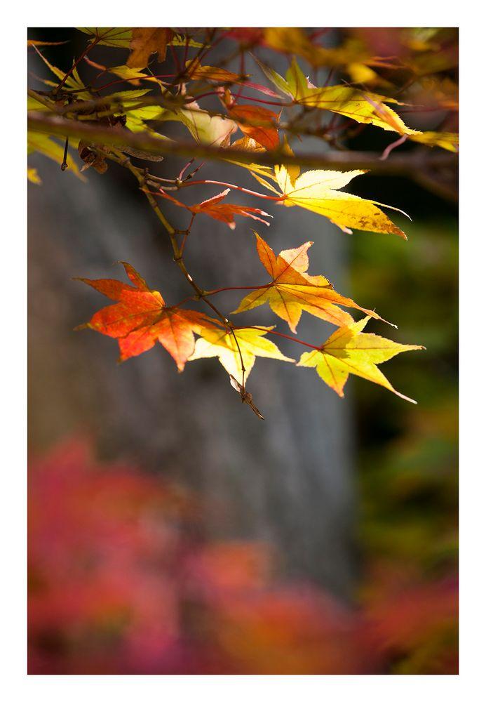 Autumn Leaves-11