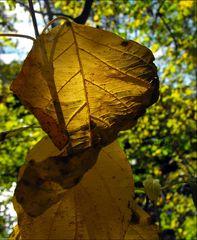 """""""Autumn Leaves 2"""""""