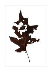 Autumn Leaves #3 (Pencile of Nature)