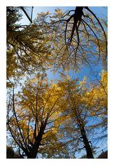 Autumn Leaves-4