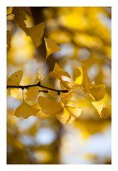 Autumn Leaves-5
