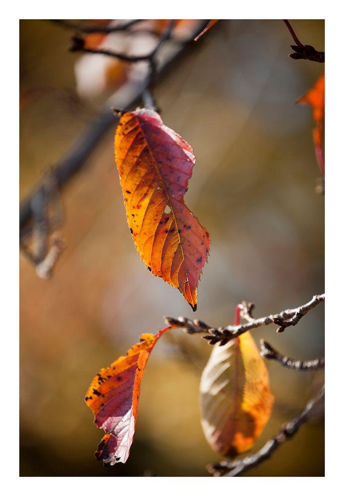 Autumn Leaves-6