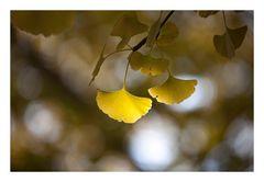 Autumn Leaves-7