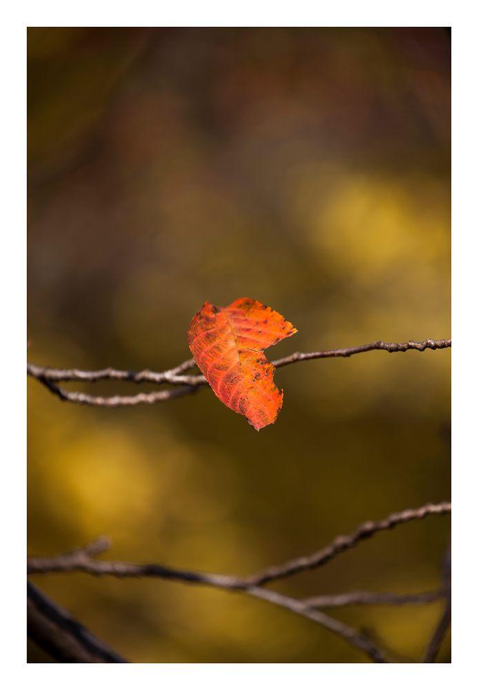 Autumn Leaves-8