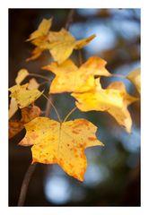 Autumn Leaves-9