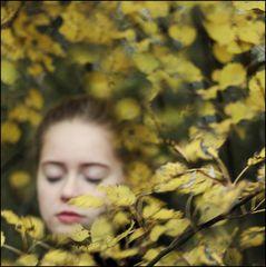 Autumn Leaves....