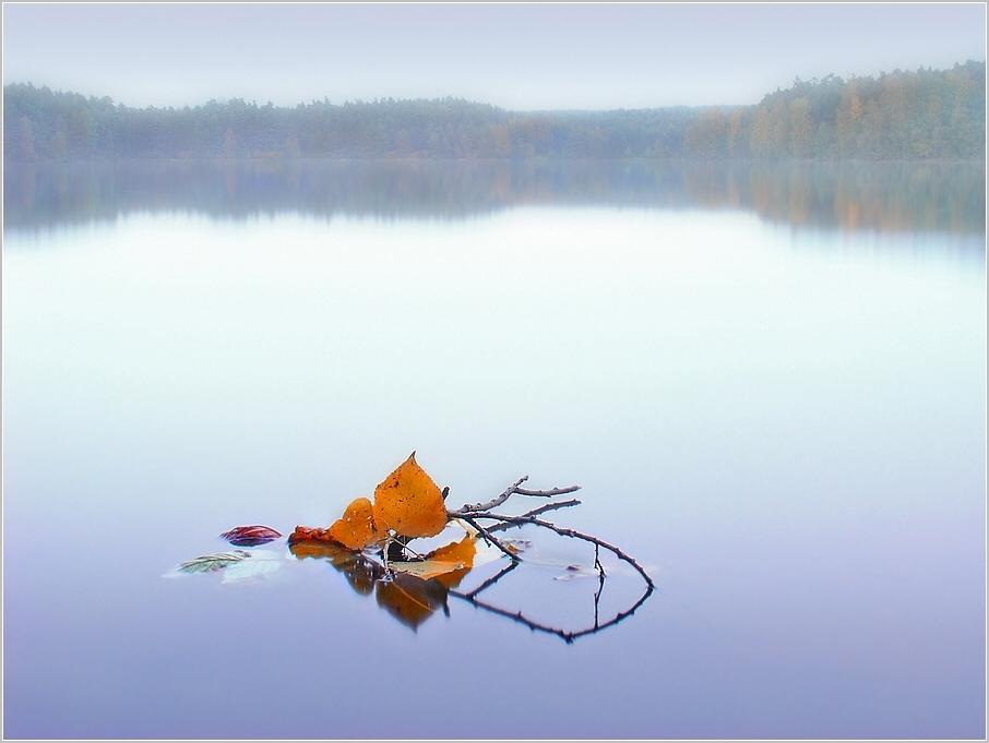 «Autumn Leaves»