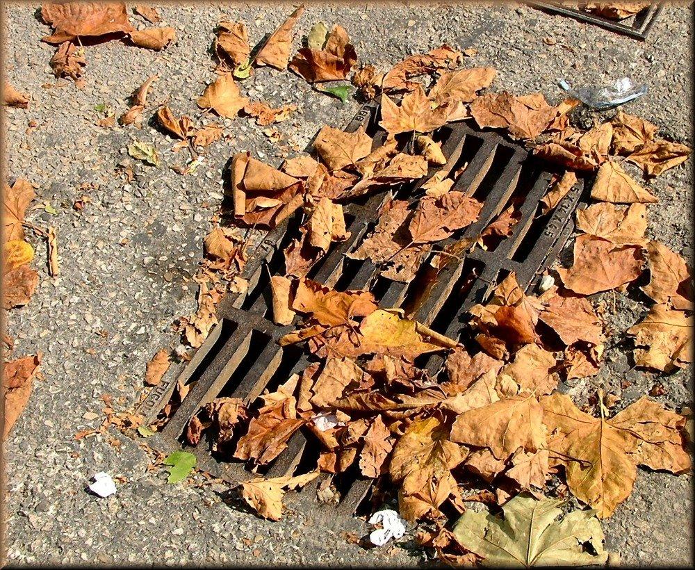 Autumn leaves....!! Urlaubende.