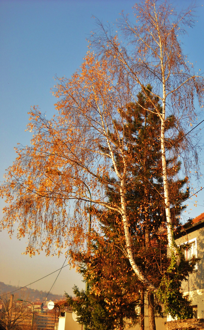 Autumn leaving...winter coming