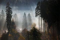 * Autumn Light II *