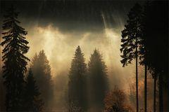 * Autumn Light IV **