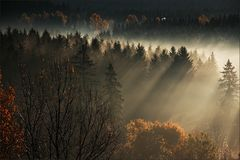 * Autumn Light VI *