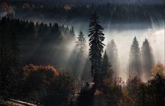 * Autumn Light VII *
