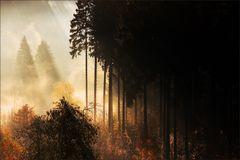* Autumn Light VIII *