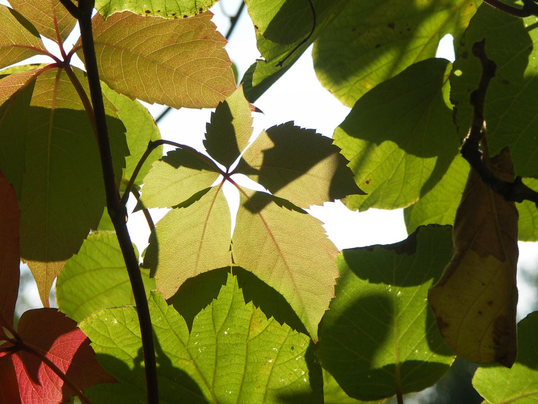 Autumn lights in autumn time