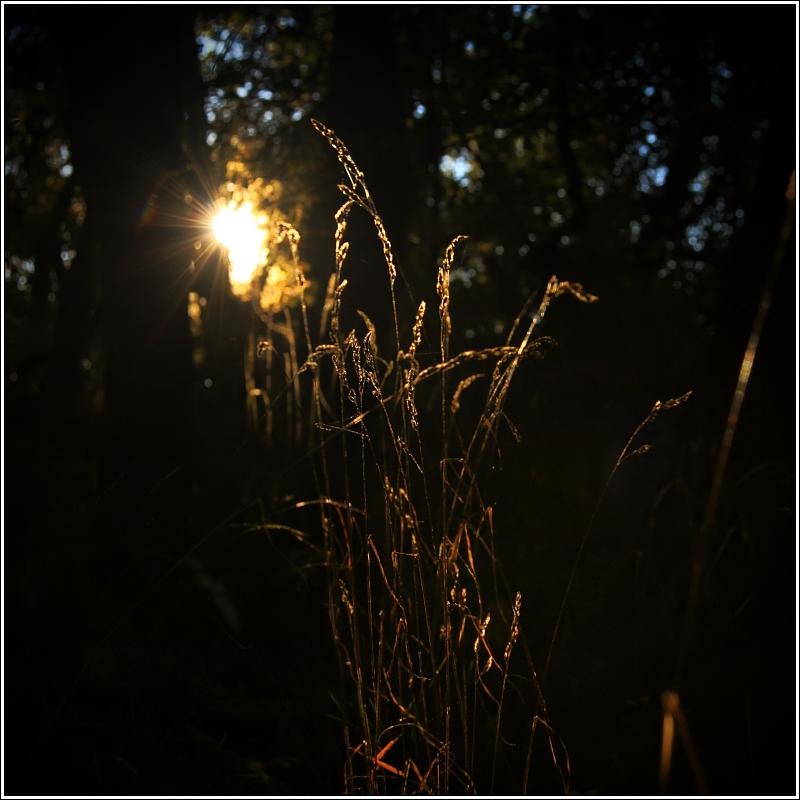 | autumn lights | x