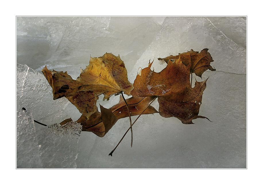 « Autumn meets Winter ... »