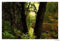 """"""" Autumn musings """""""