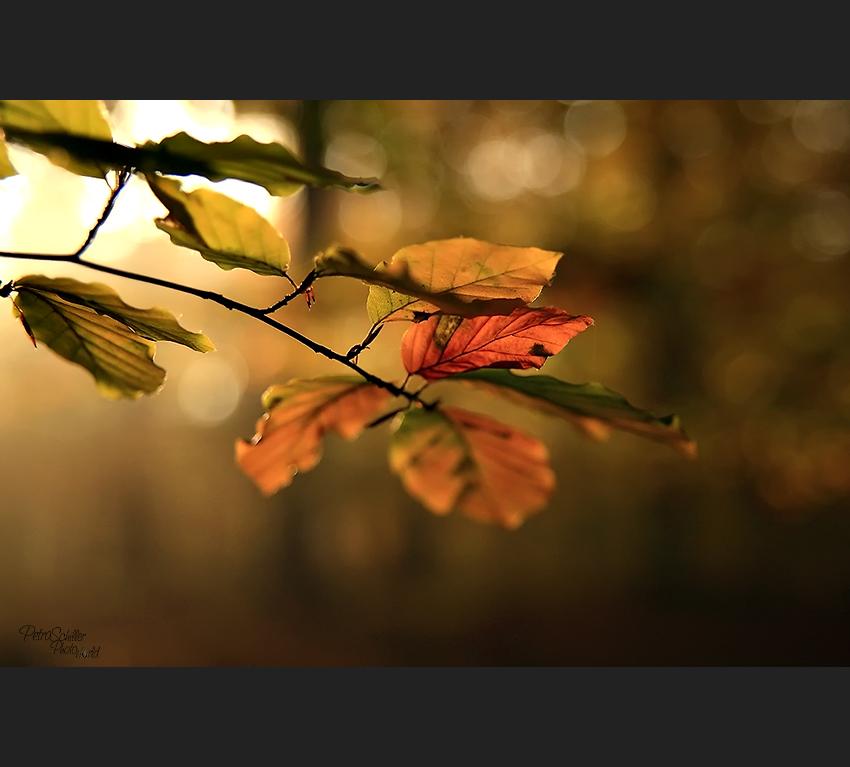 Autumn my love