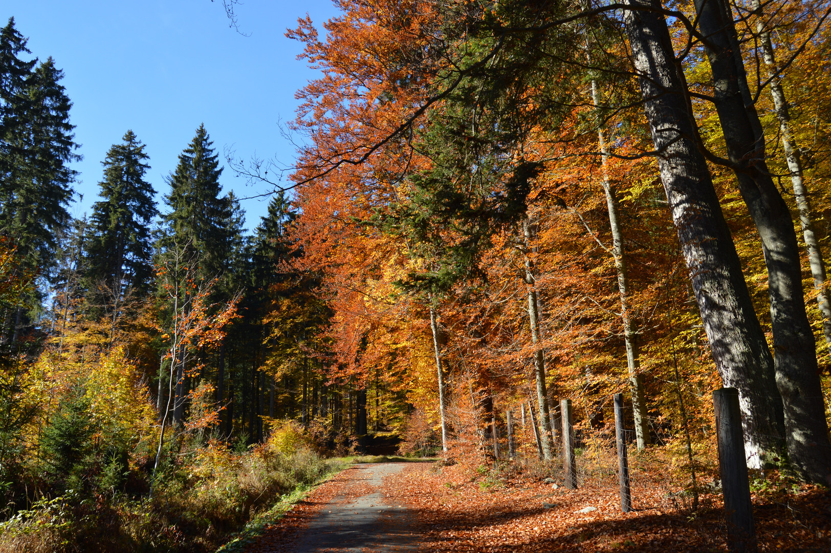 autumn nature in the forest