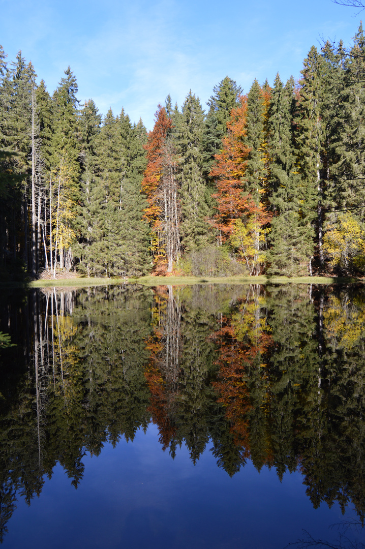 autumn nature, reflection in water