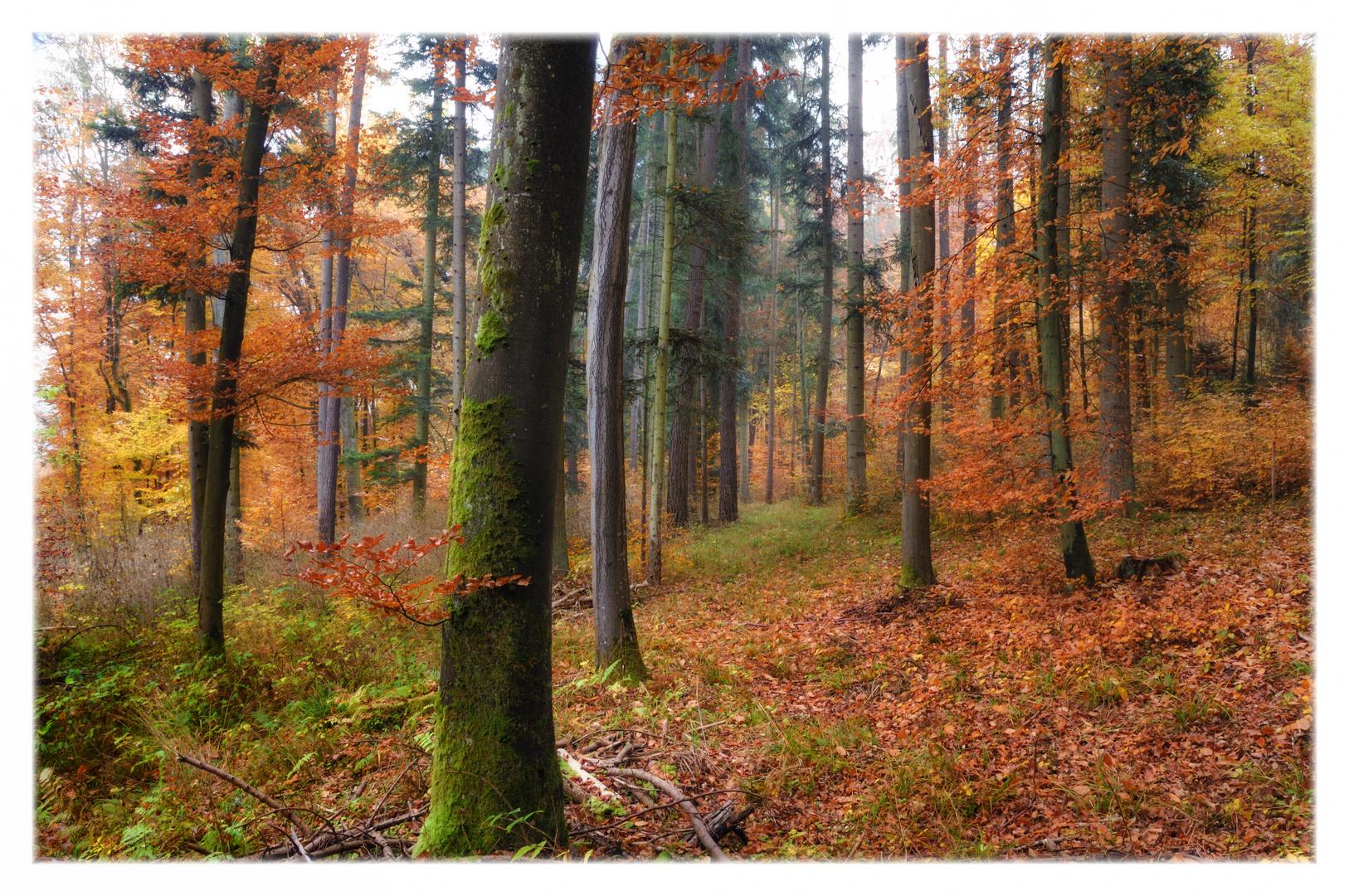 autumn paintings (I)