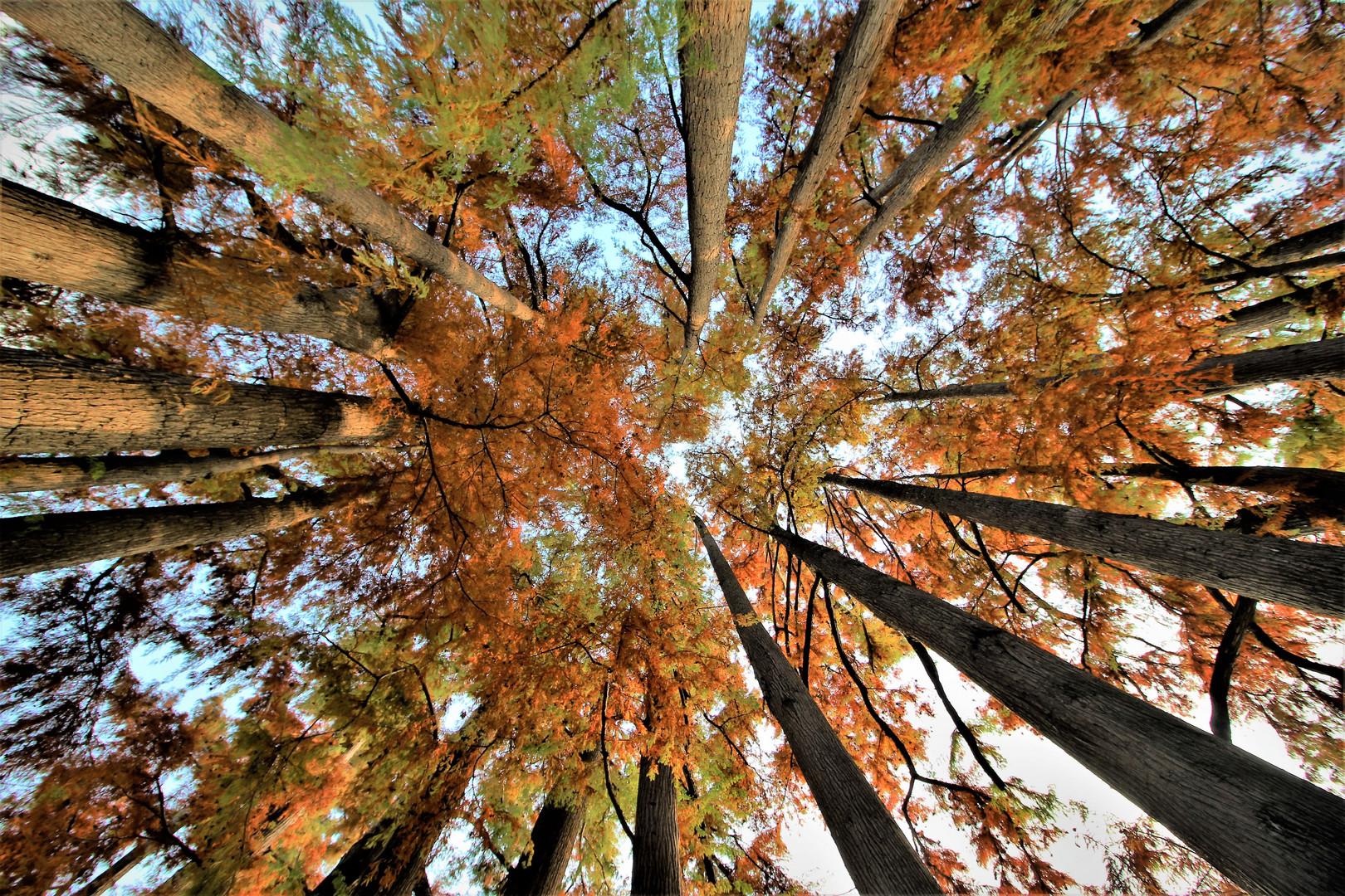 autumn perspectives