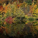 Autumn Reflecion