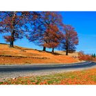 Autumn road at Ranca - Romania