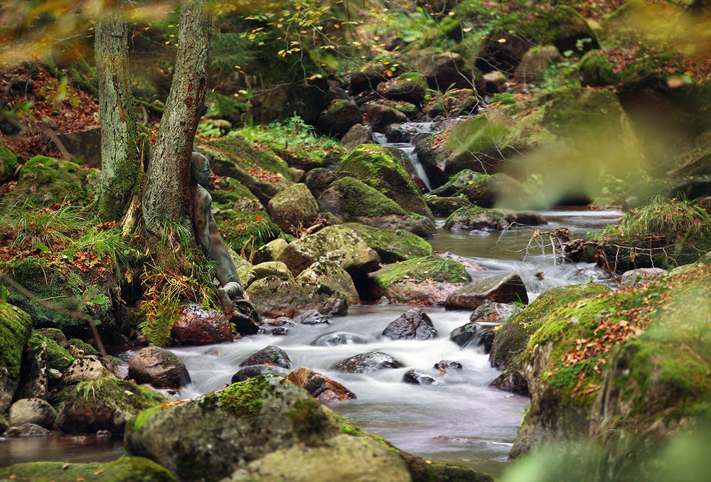 autumn root camouflage
