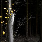 Autumn - Silence