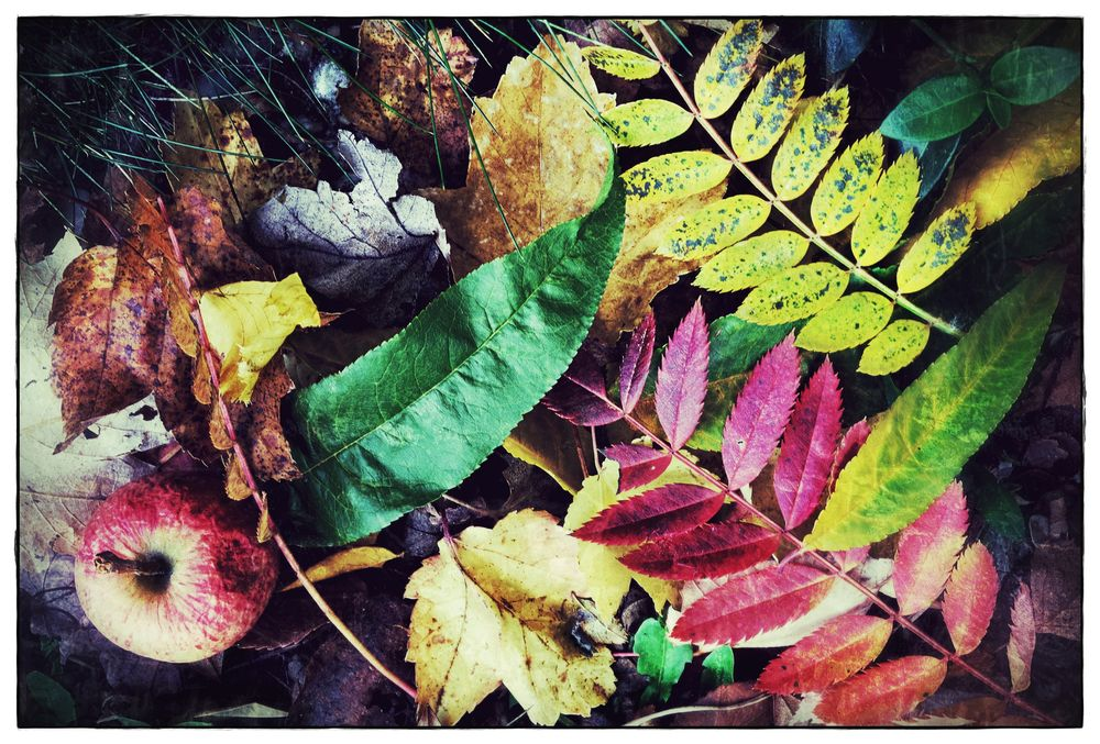 autumn soil