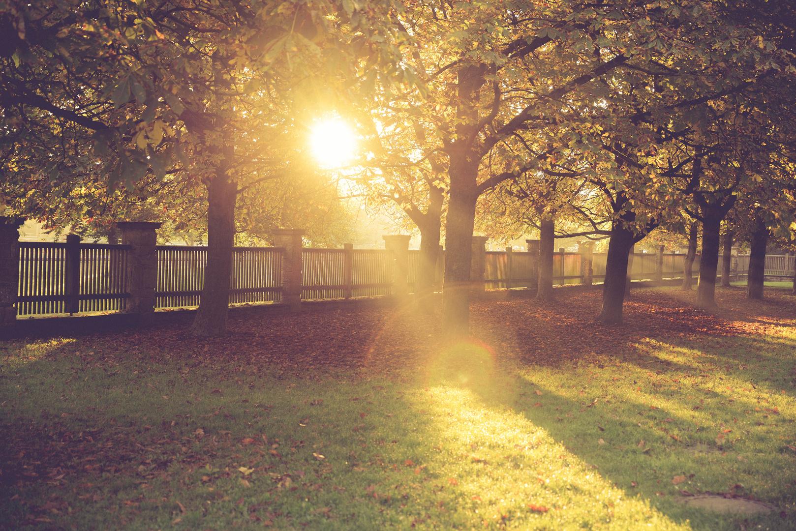 Autumn Sunrise I