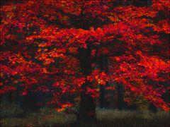 autumn times