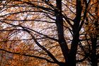 autumn totally