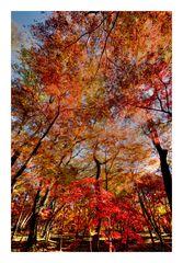 Autumn tree-1