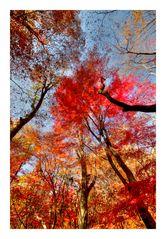 Autumn tree-2