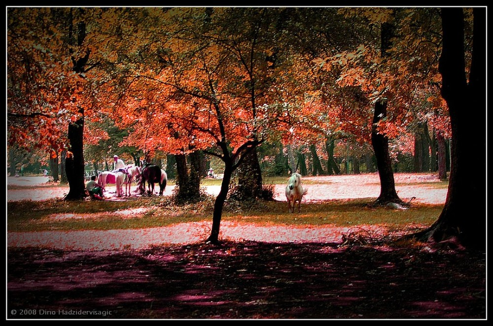 Autumn With Horses