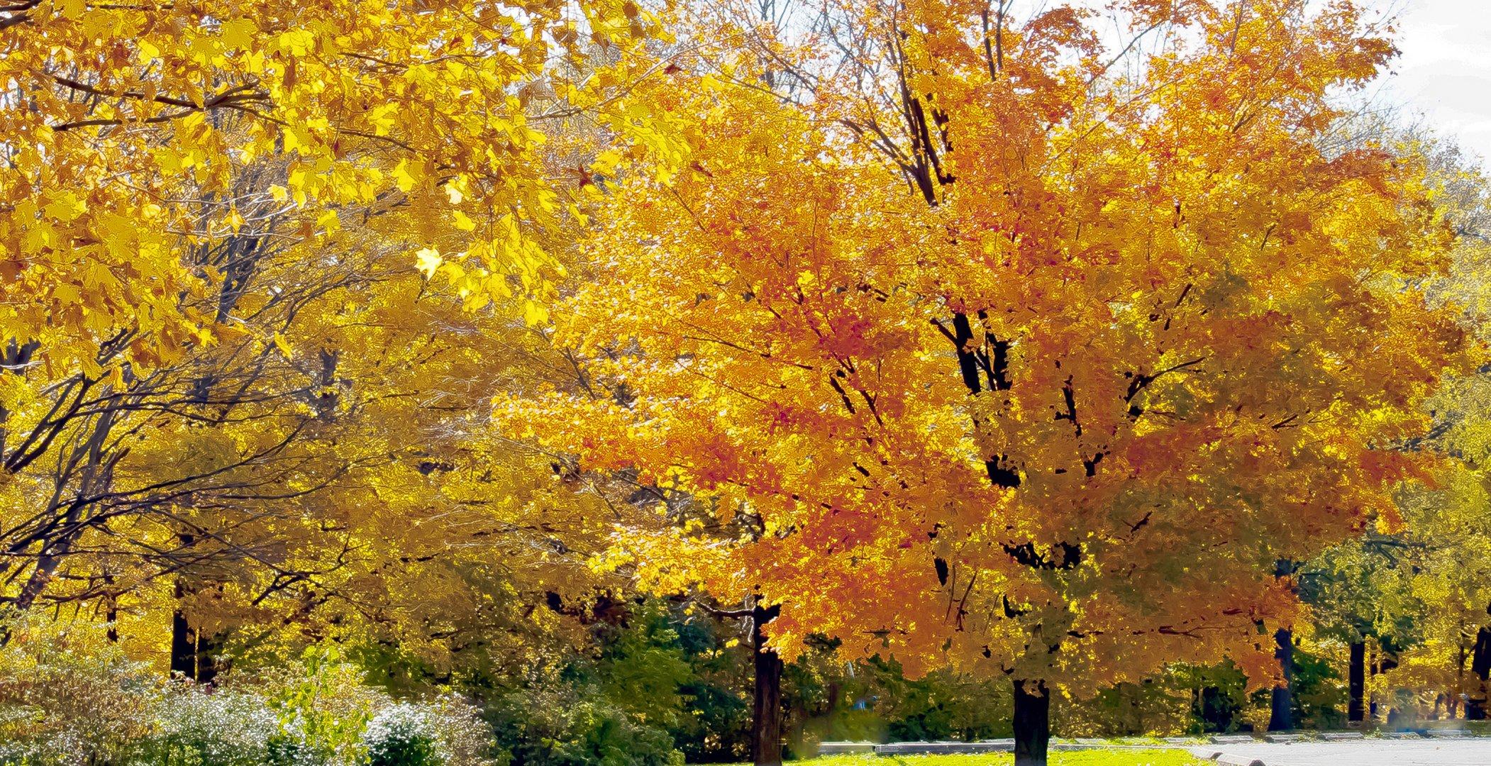 autumnal ontario 1