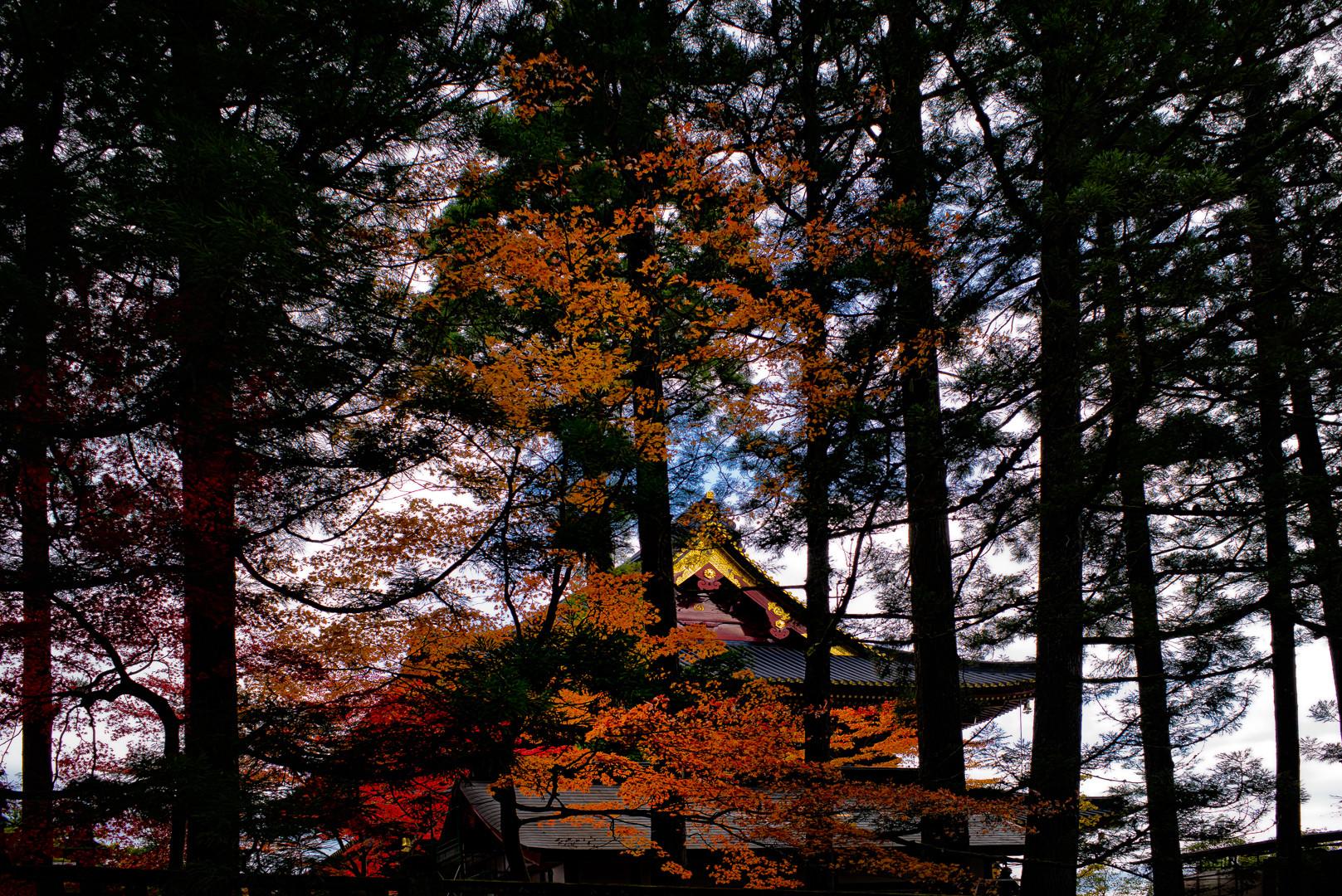 autumn.colors