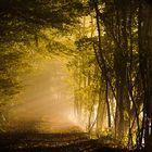Autumn's tunnel