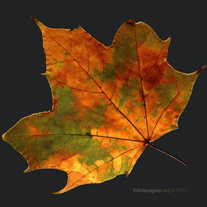 « autumnus »
