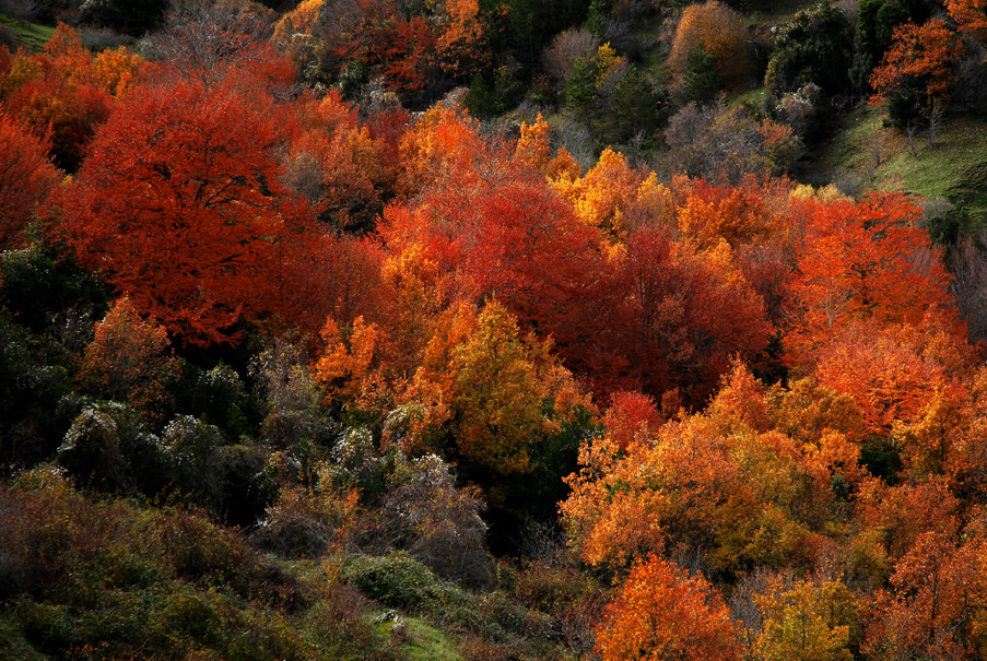 autunno 02